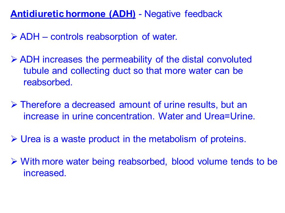 Antidiuretic hormone (ADH) - Negative feedback