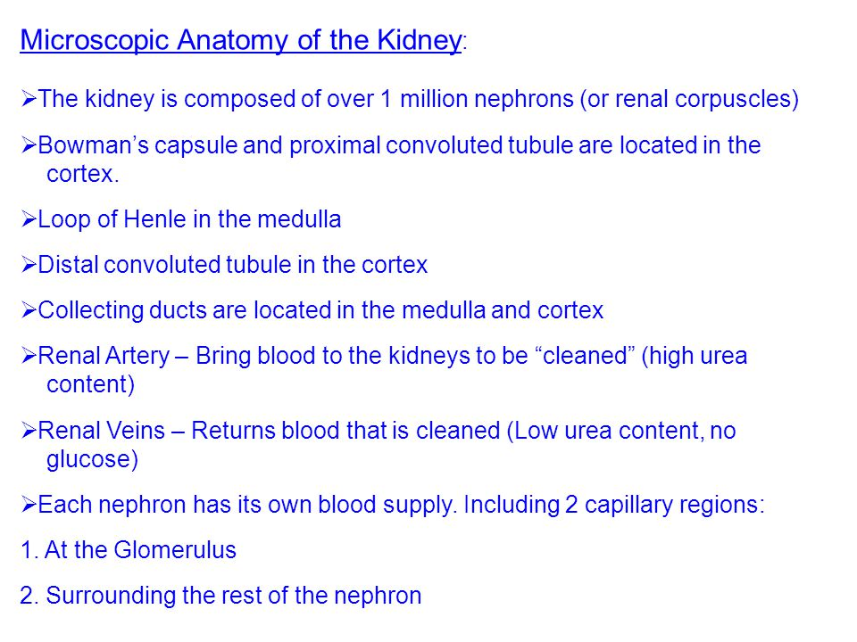 Microscopic Anatomy of the Kidney: