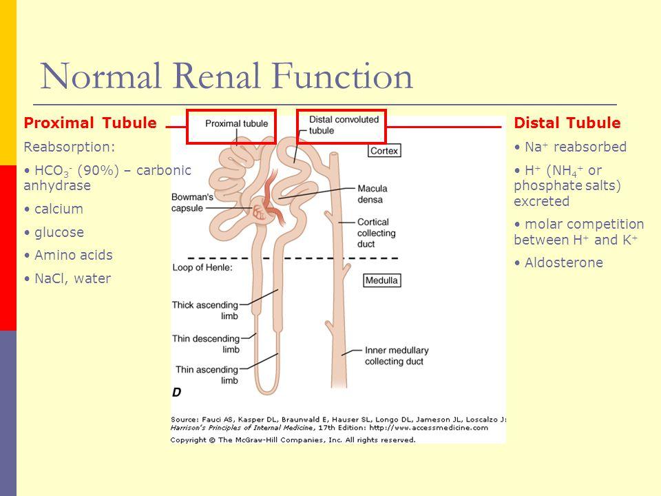Renal Tubular Acidosis Ppt Video Online Download