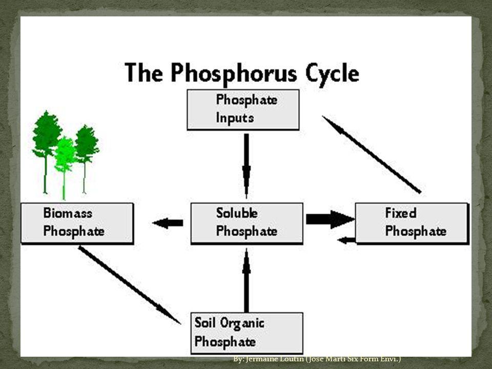 The Phosphorus Cycle By Jermaine Loutin Jose Marti Six Form Envi