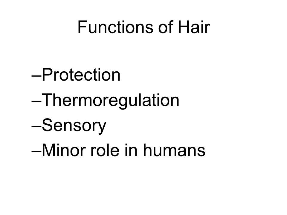 Functions of Hair Protection Thermoregulation Sensory Minor role in humans