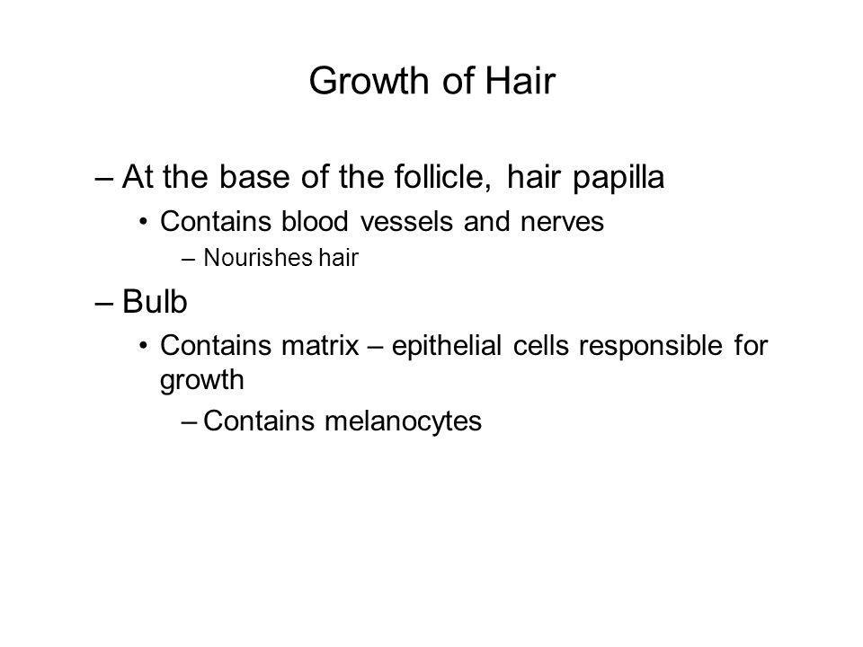 Growth of Hair At the base of the follicle, hair papilla Bulb