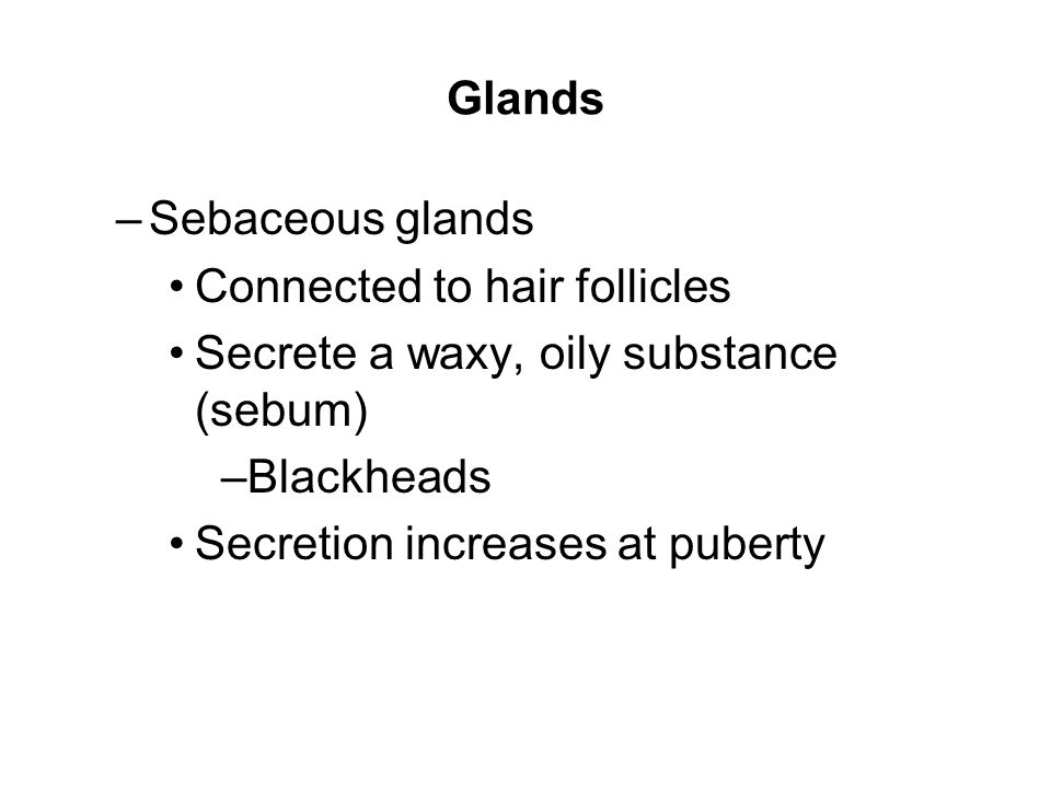 Glands Sebaceous glands. Connected to hair follicles. Secrete a waxy, oily substance (sebum) Blackheads.