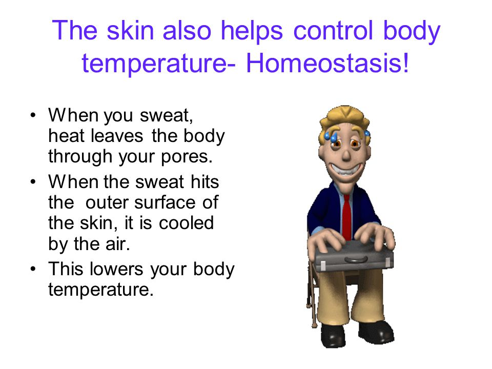 The skin also helps control body temperature- Homeostasis!