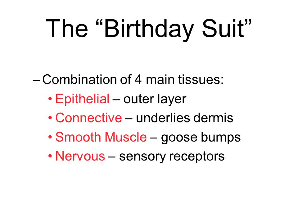 The Birthday Suit Combination of 4 main tissues: