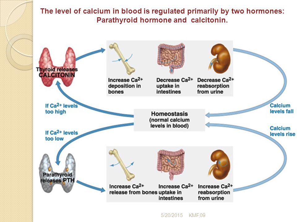 Calcium Phosphate And Alkaline Phosphatase Ppt Video Online Download. The Level Of Calcium In Blood Is Regulated Primarily By Two Hormones. Wiring. Bones In Calcium Homeostasis Diagram At Scoala.co