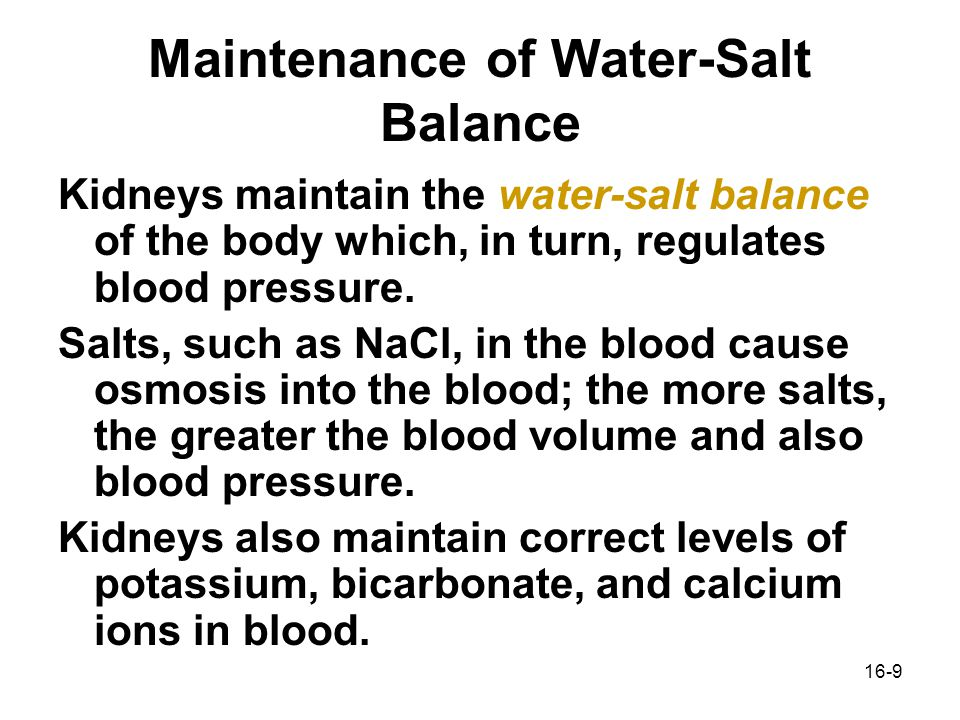how do the kidneys maintain water balance in the body