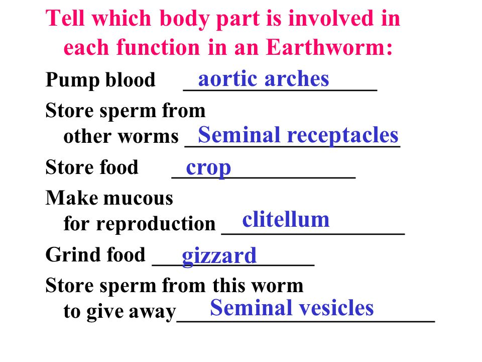 Earthworm Dissection Review - ppt video online download