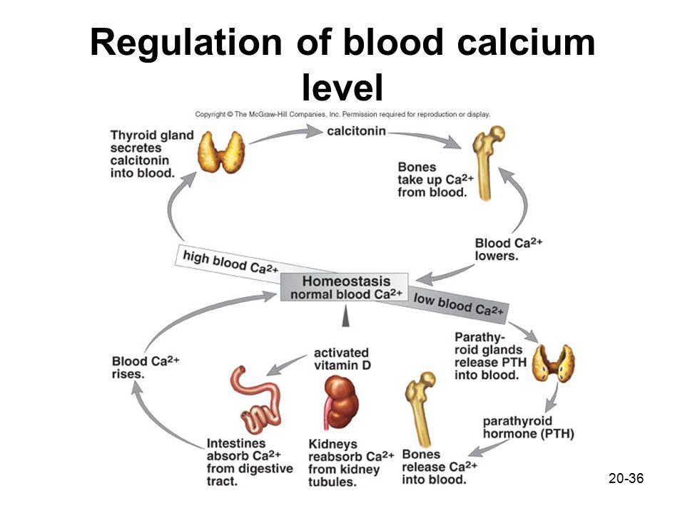 Diagram The Regulation Of Blood Calcium Levels Diy Enthusiasts