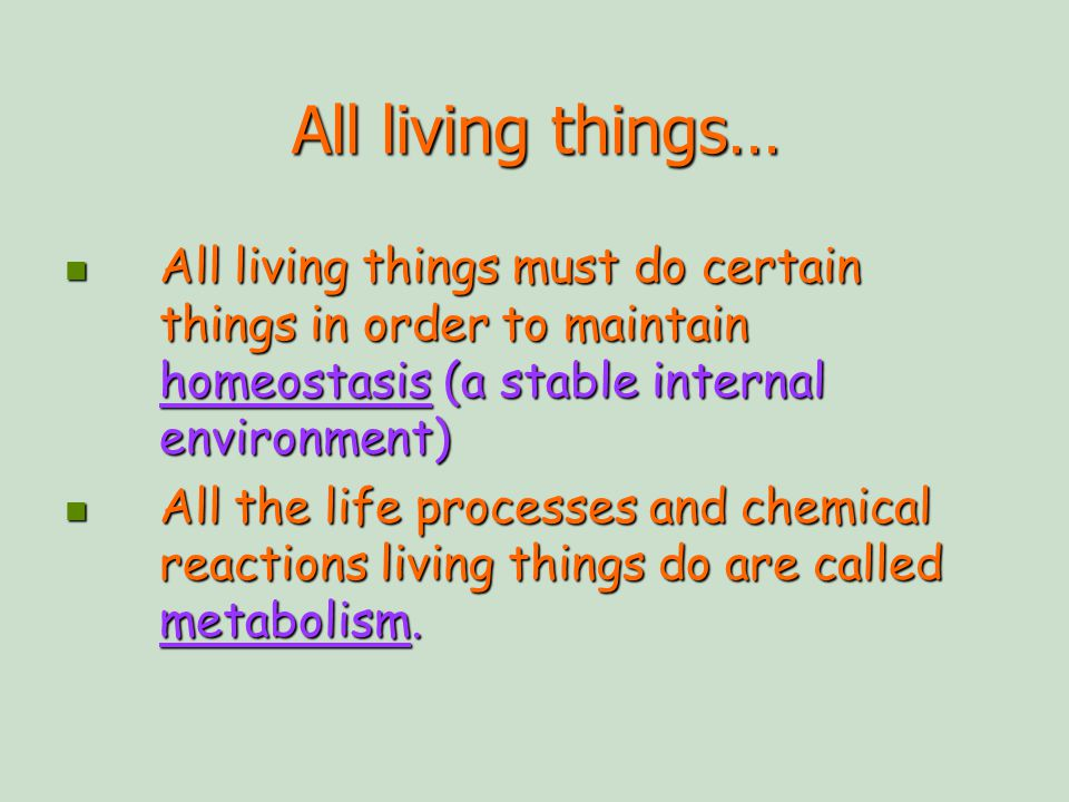 All Living Things All Living Things Must Do Certain Things In Order To Maintain Homeostasis