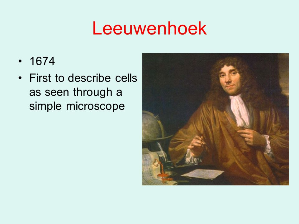 Leeuwenhoek 1674 First to describe cells as seen through a simple microscope