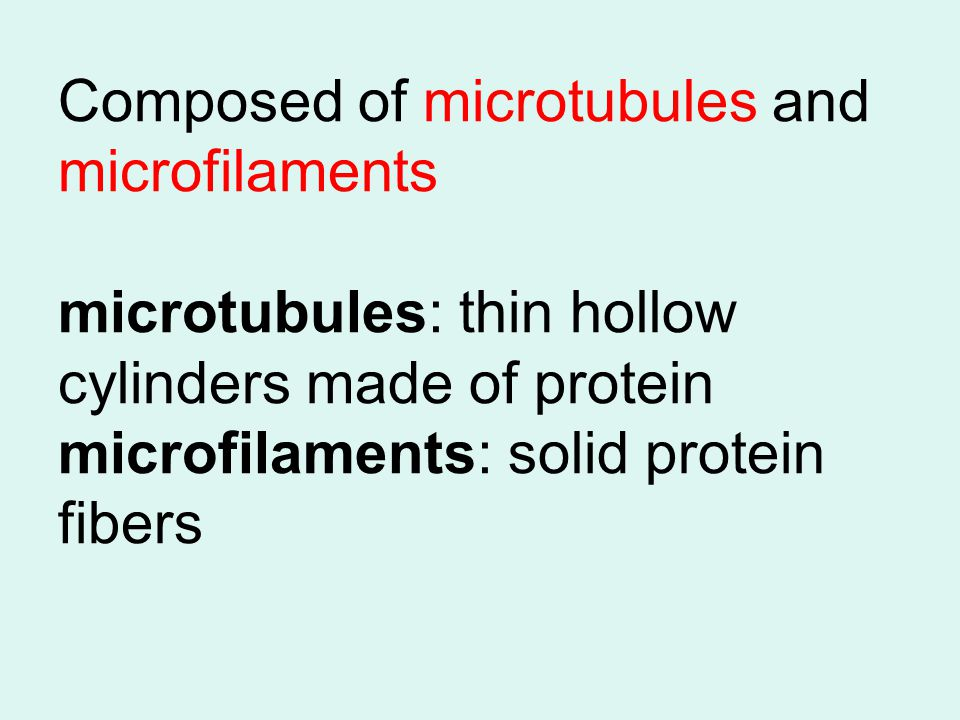 Composed of microtubules and microfilaments microtubules: thin hollow cylinders made of protein microfilaments: solid protein fibers
