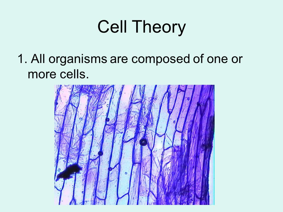 Cell Theory 1. All organisms are composed of one or more cells.