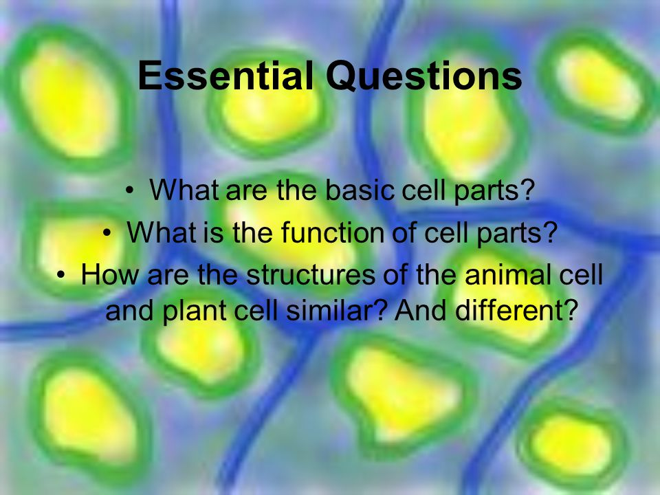 Plant and animal cells by mcnutt brown ppt download essential questions what are the basic cell parts ccuart Gallery