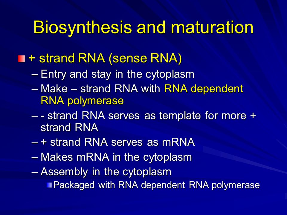 Biosynthesis and maturation