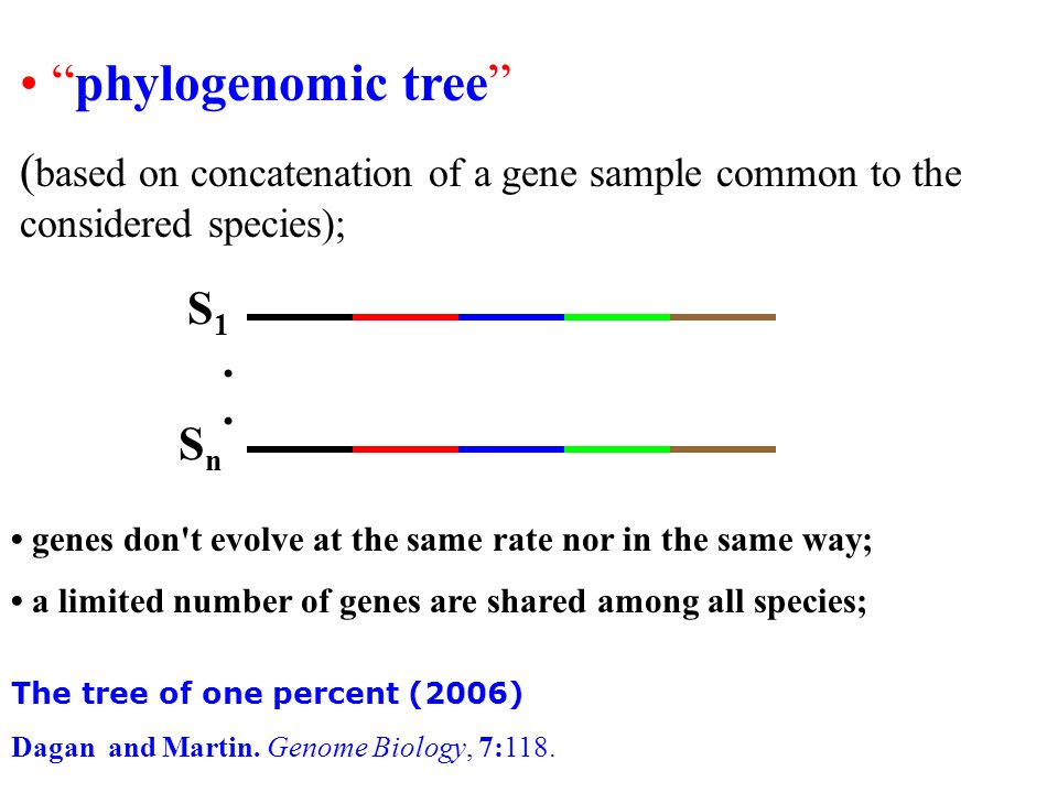 • phylogenomic tree (based on concatenation of a gene sample common to the considered species); S1.