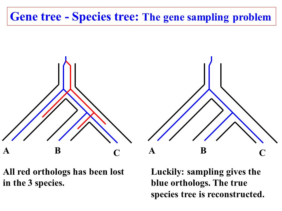 Gene tree - Species tree: The gene sampling problem