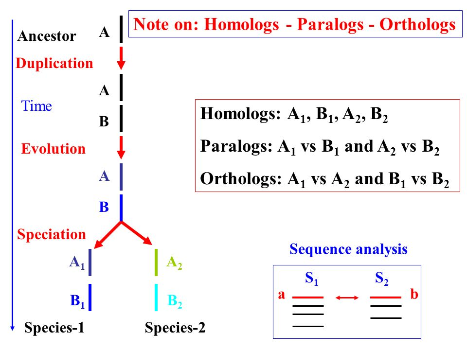Note on: Homologs - Paralogs - Orthologs
