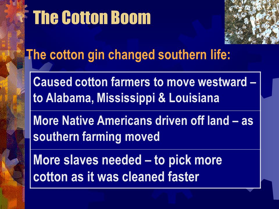 The Cotton Boom The cotton gin changed southern life: