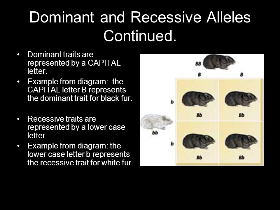 Dominant and Recessive Alleles Continued.
