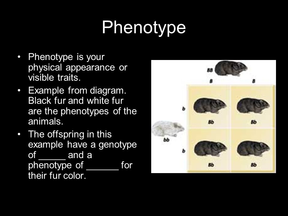 Phenotype Phenotype is your physical appearance or visible traits.