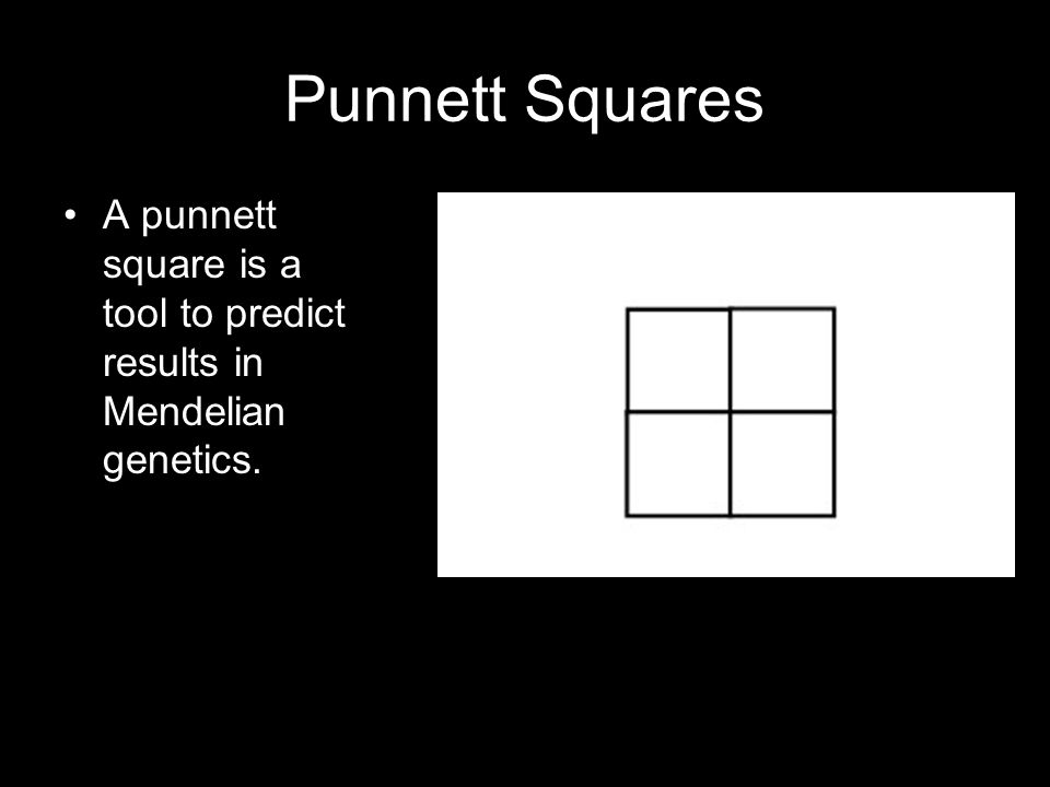 Punnett Squares A punnett square is a tool to predict results in Mendelian genetics.