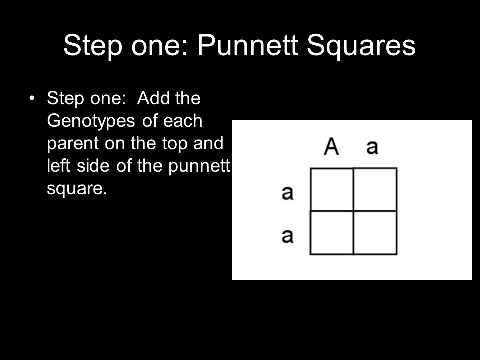 Step one: Punnett Squares