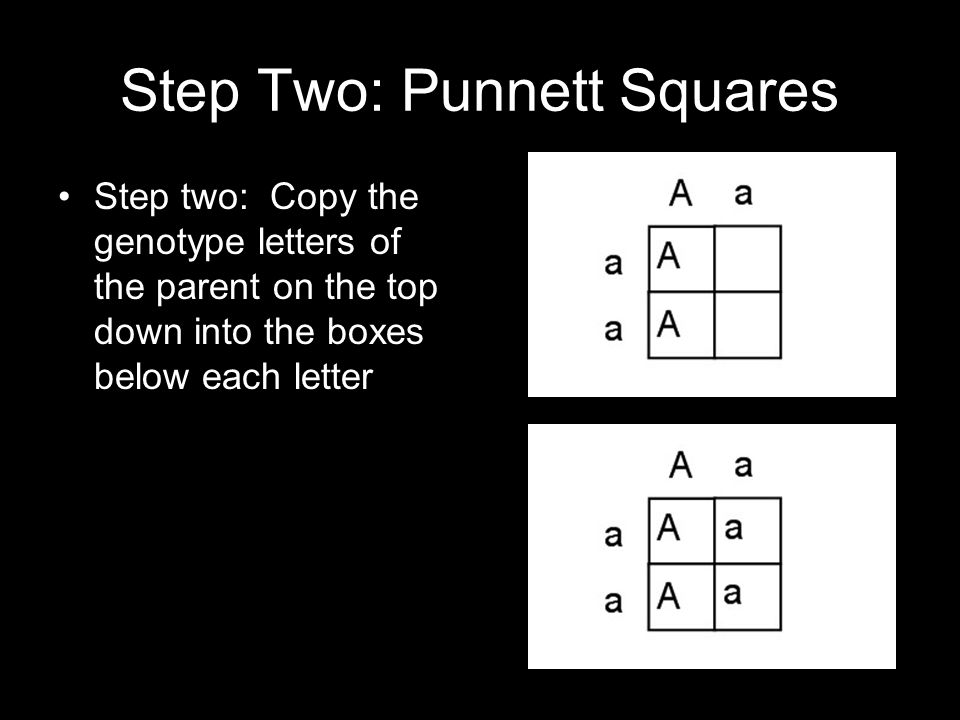 Step Two: Punnett Squares