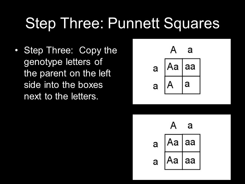 Step Three: Punnett Squares