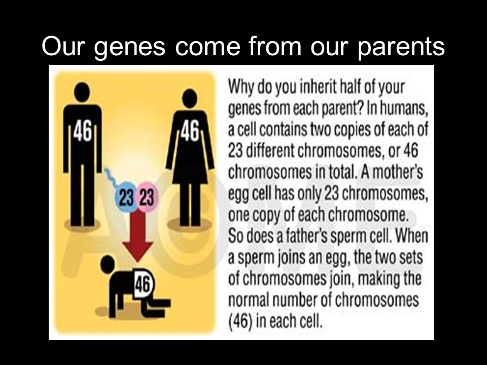 Our genes come from our parents