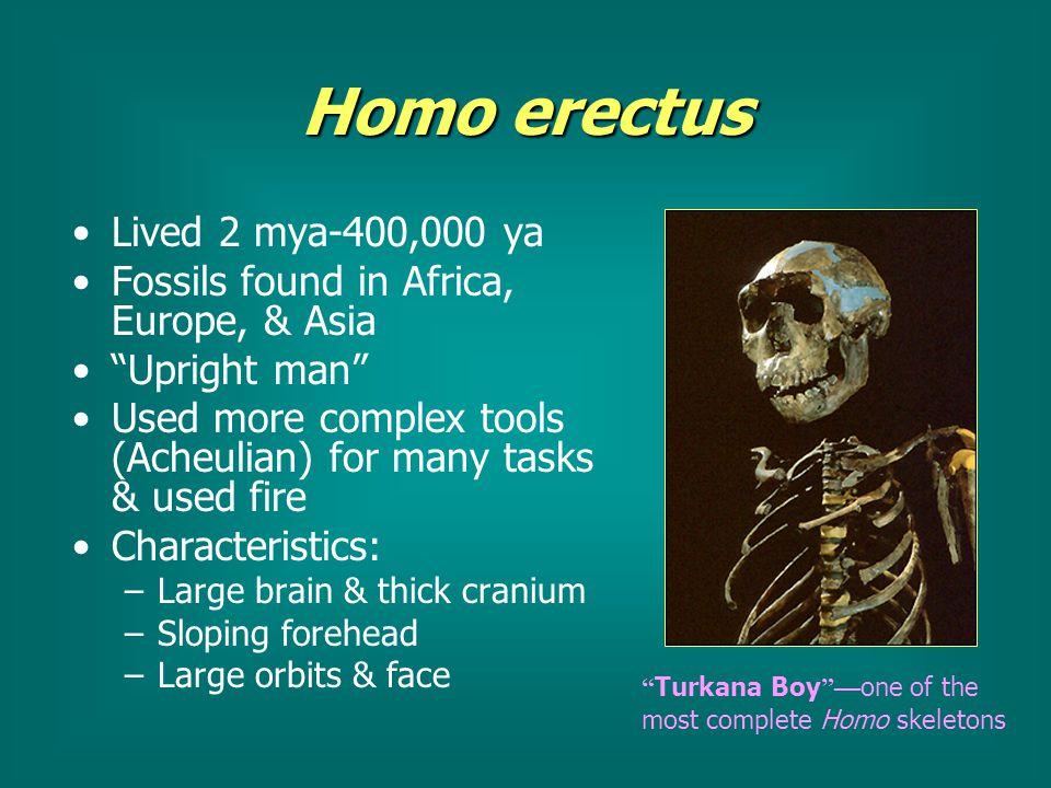 homo erectus traits