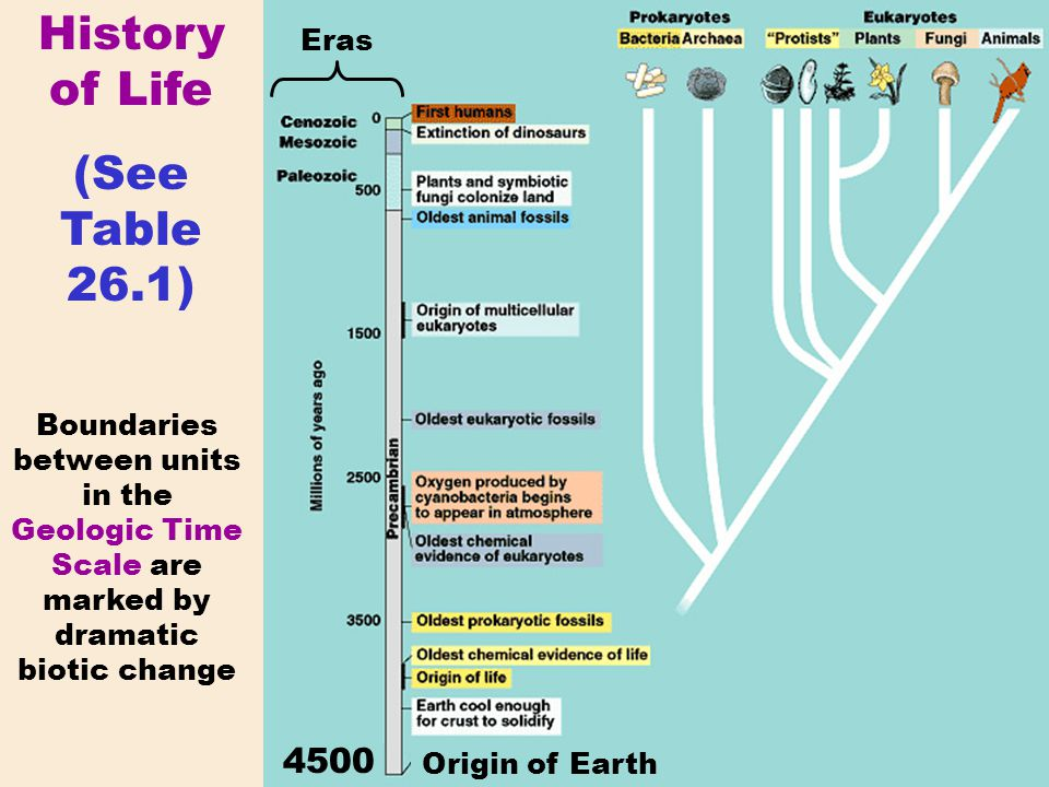 History of Life (See Table 26.1) 4500 Eras