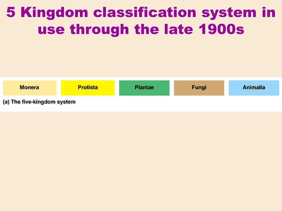5 Kingdom classification system in use through the late 1900s