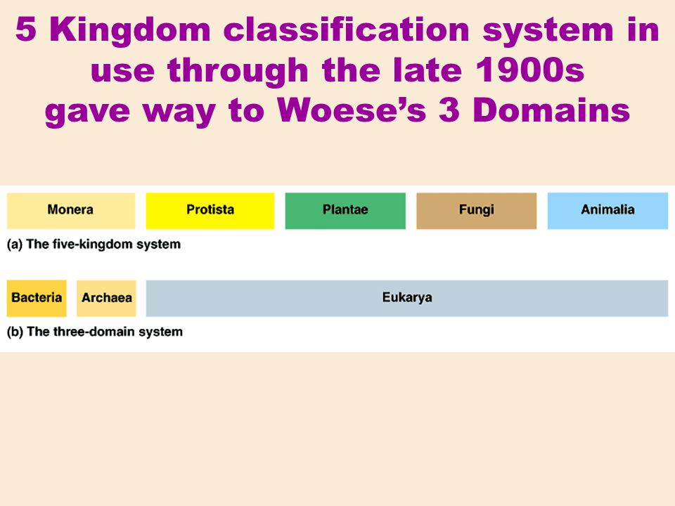 5 Kingdom classification system in use through the late 1900s gave way to Woese's 3 Domains