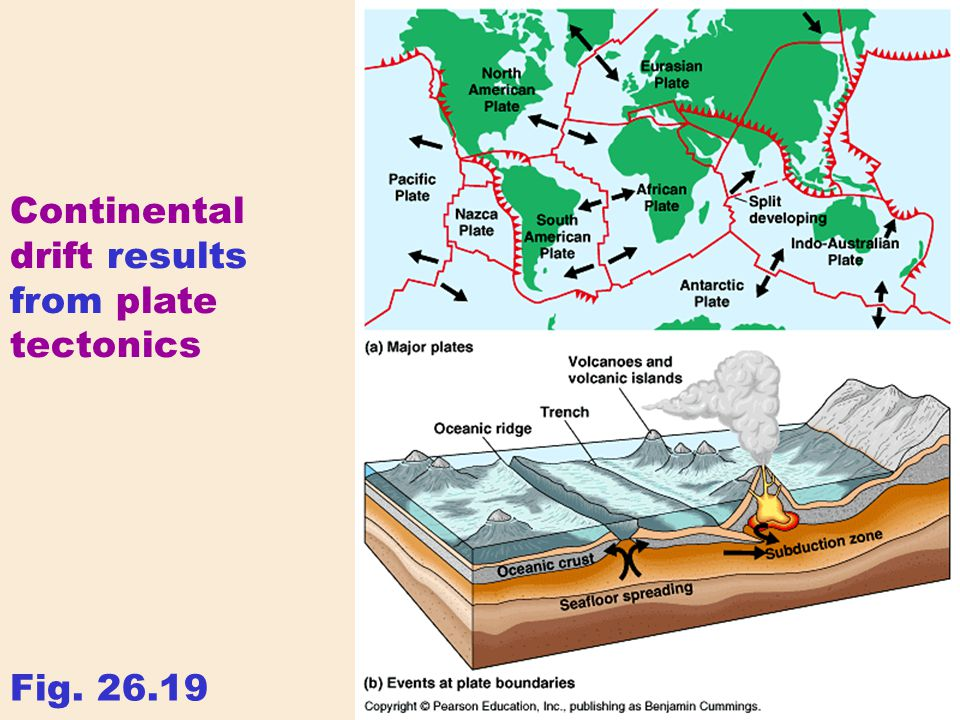 Continental drift results from plate tectonics