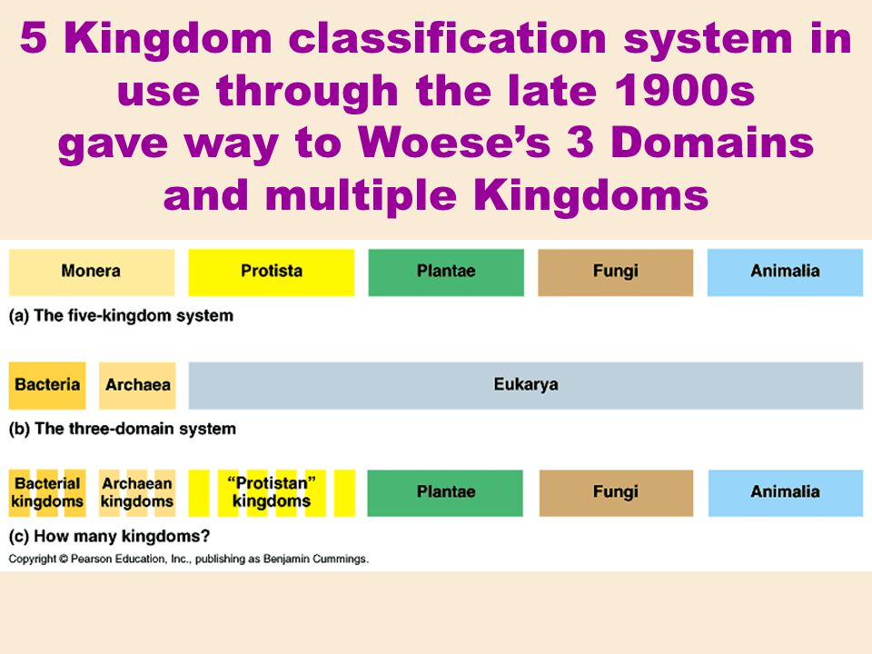 5 Kingdom classification system in use through the late 1900s gave way to Woese's 3 Domains and multiple Kingdoms