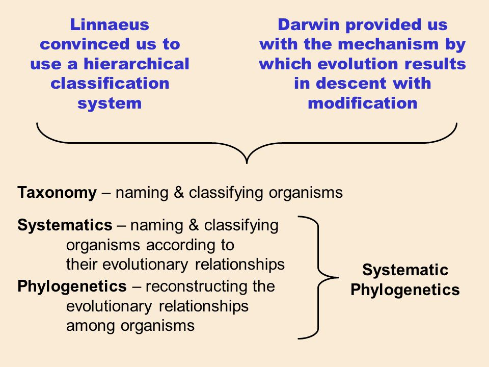 Linnaeus convinced us to use a hierarchical classification system