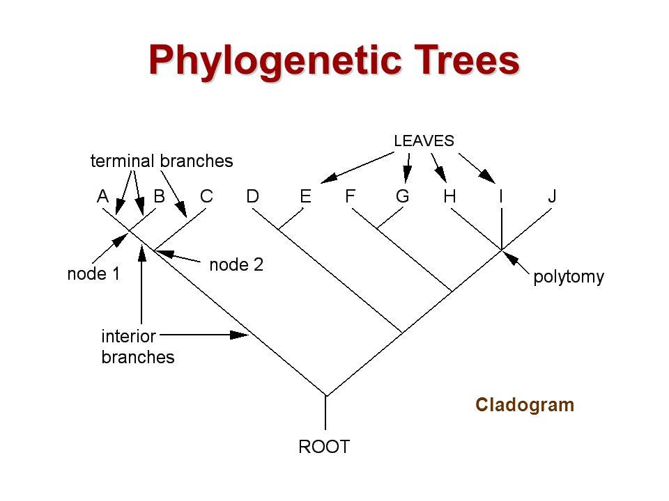 phylogenetic trees - i