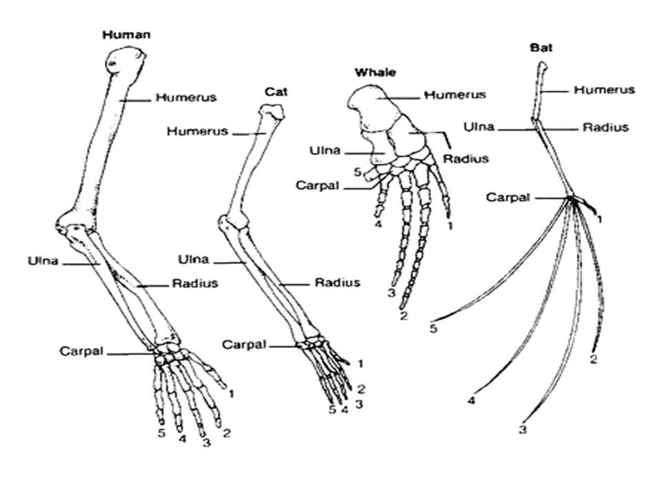 Evidence Of Evolution Worksheet Answer Key ...