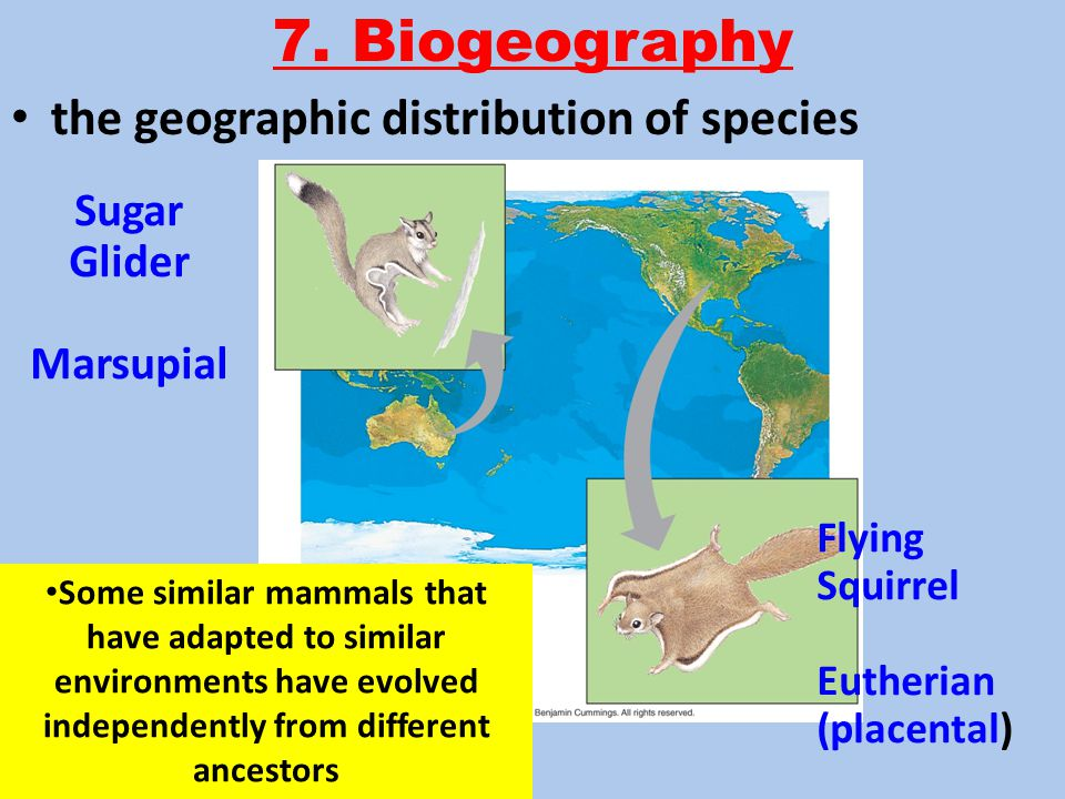 how marsupials adapt to the arid How did australia come to be marsupial heaven, anyway well, australia has a unique history: when it became isolated from the rest of the world, the only so we have evidence here, quite independent of any other evidence from australia, that says large marsupials were well-adapted to the arid zone.