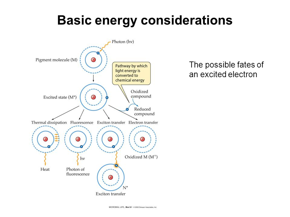 The Conversion Of Light Energy To Chemical Energy Ppt Video Online