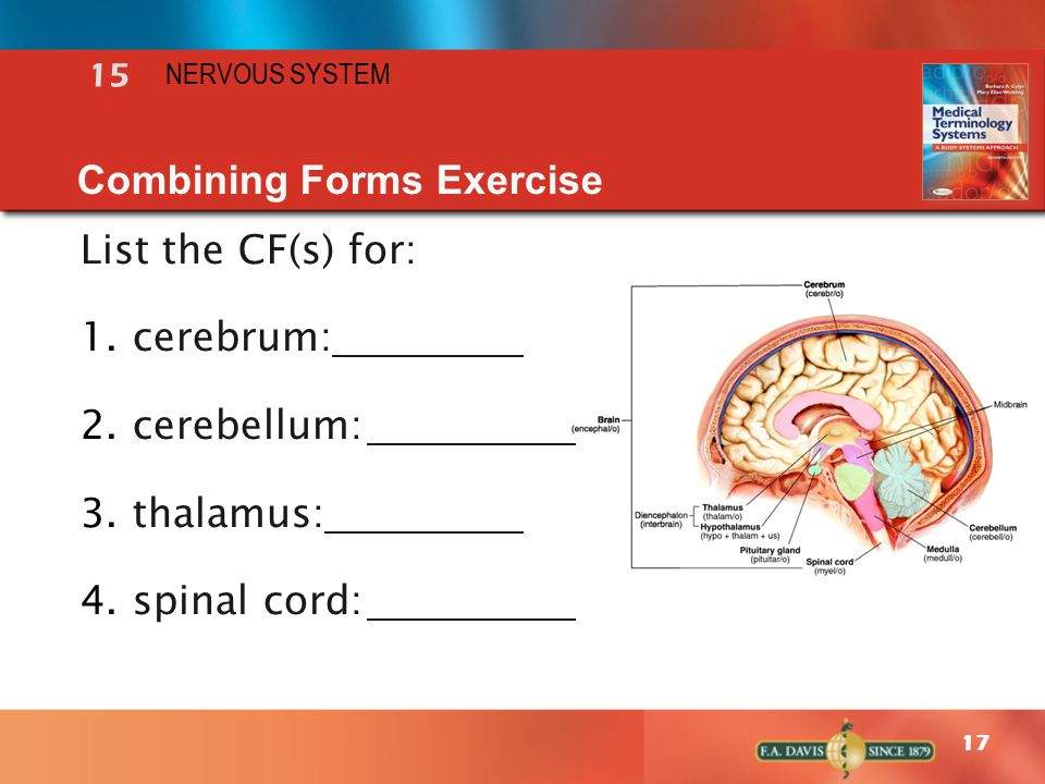 combining form for spinal cord