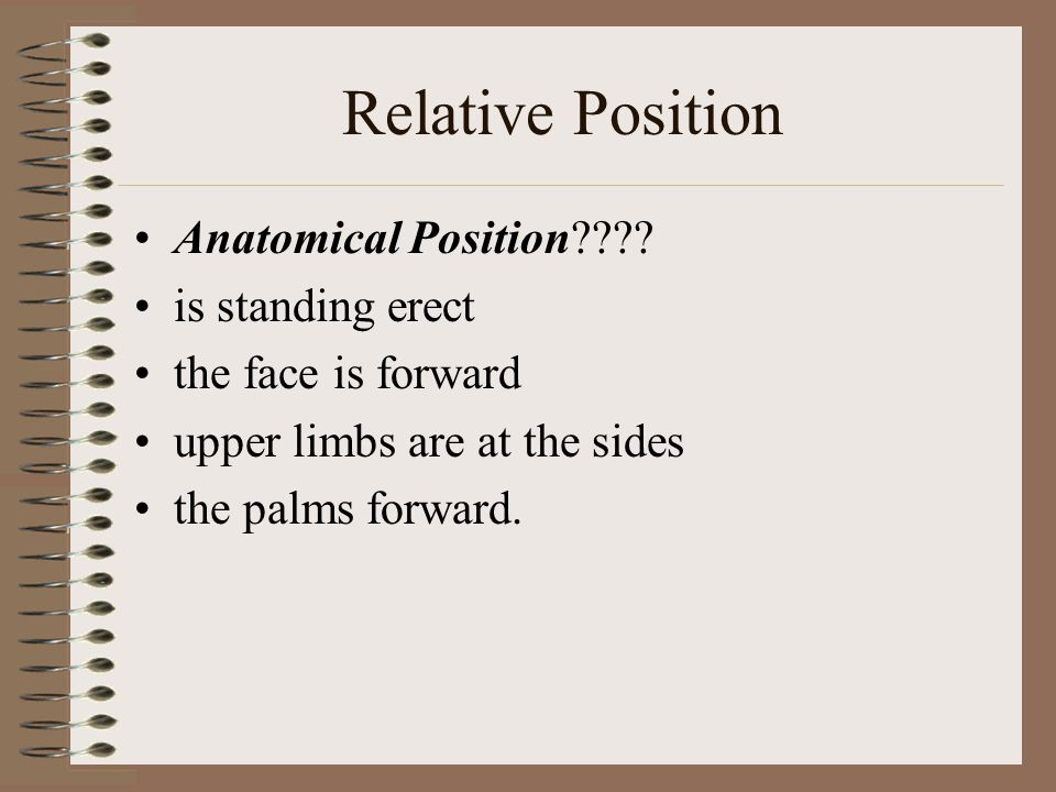 Anatomical Terminology Ppt Video Online Download. Relative Position Anatomical Is Standing Erect. Worksheet. Anatomical Terminology Worksheet At Clickcart.co