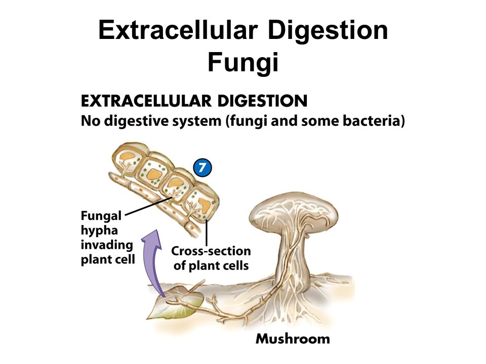 Nutrition And Digestion Ppt Video Online Download