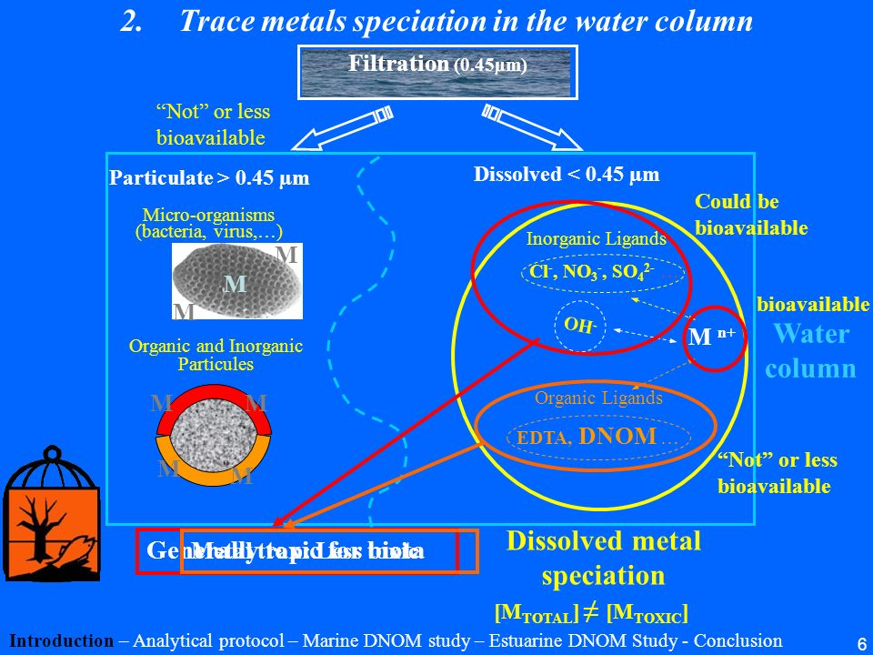Trace metals speciation in the water column