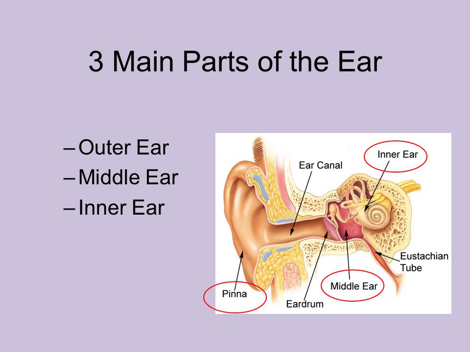 What Happens When You Get An Ear Infection Ppt Download