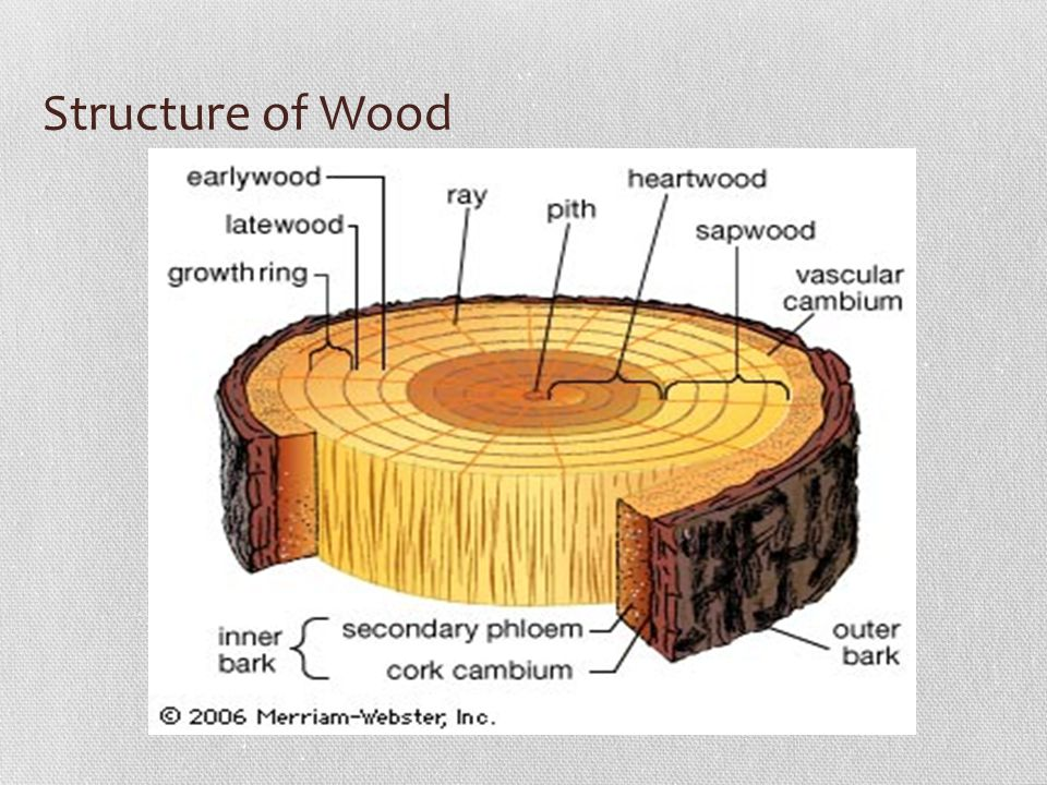18 structure of wood