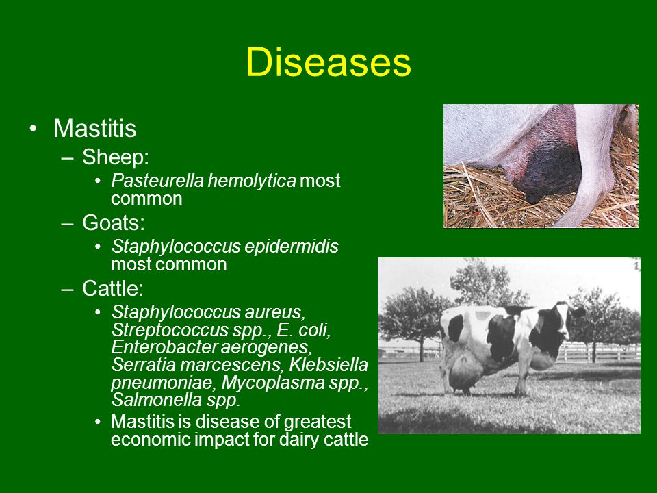 Biology, Management, Diseases, and Uses of Sheep, Goats, and
