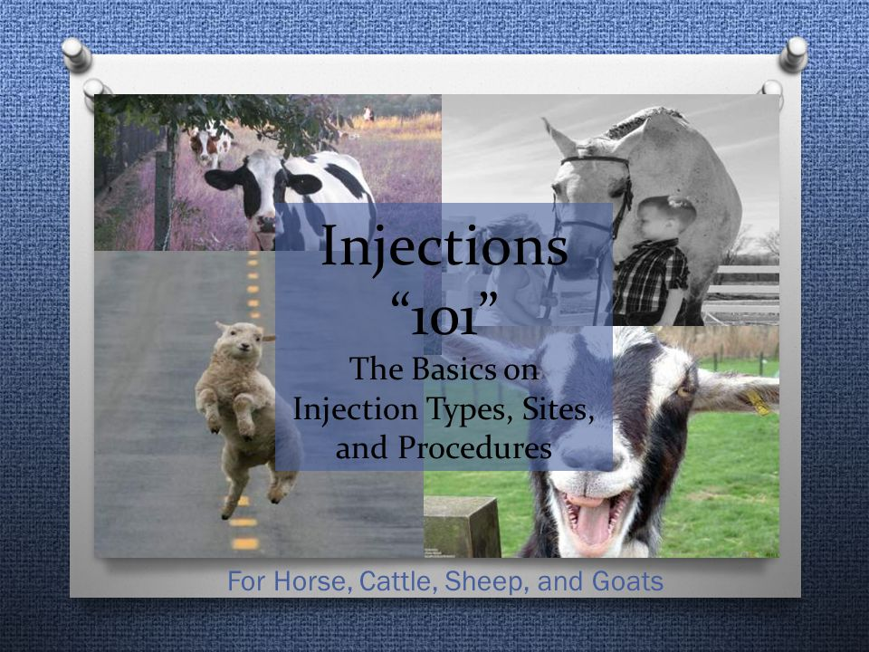 Injections 101 The Basics on Injection Types, Sites, and Procedures