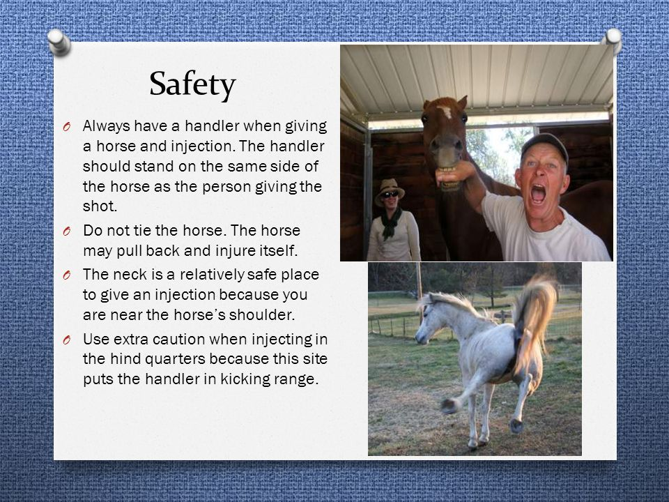 Safety Always have a handler when giving a horse and injection. The handler should stand on the same side of the horse as the person giving the shot.